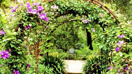 растения для оформления арки