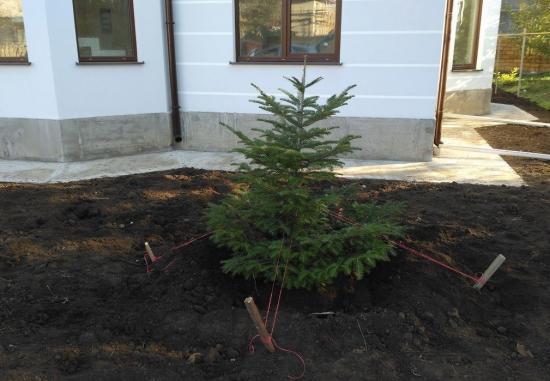 елка во дворе