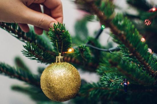 посадить новогоднюю елку