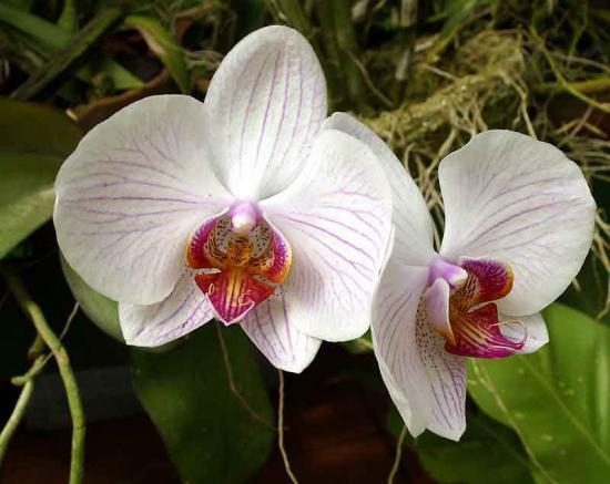 эпин для орхидей