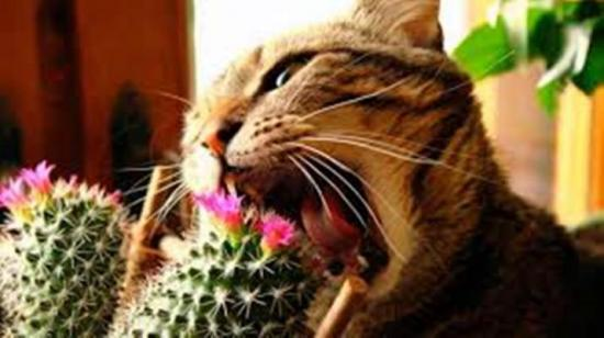 цветы в доме и животные