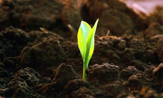 преимущества органических удобрений