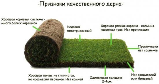 характеристики качественного газона