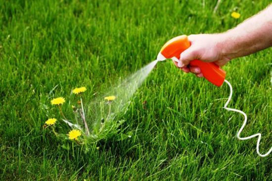 применение гербицидов против сорняков на газоне