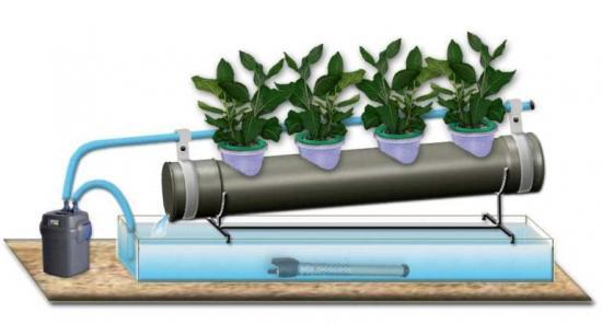 выращивания зелени на гидропонике