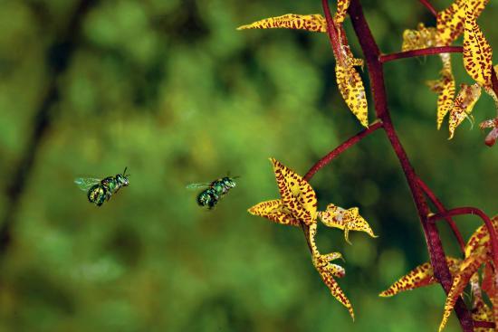 как размножают орхидею в домашних условиях