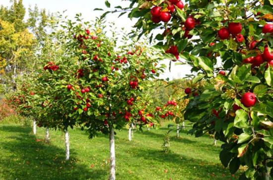 вегетация у садовых деревьев
