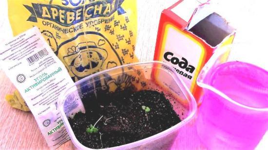 сода и марганцовка от черной ножки капусты