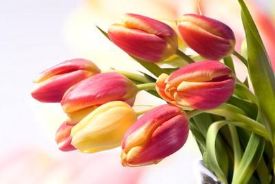 как сохранить срезанные тюльпаны