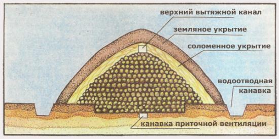условия хранения картофеля
