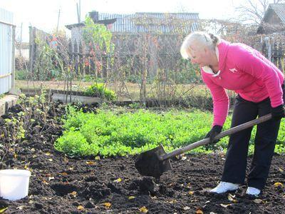 удобрения почвиы для чеснока