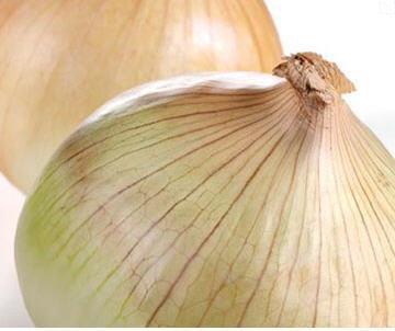 Выращивание лука Эксибишен при помощи семян