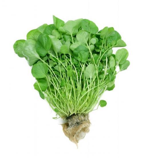 Как посадить салат на грядке?