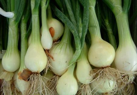 Удобрения для лука - как и когда их надо использовать