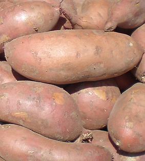 Картофель Дафна