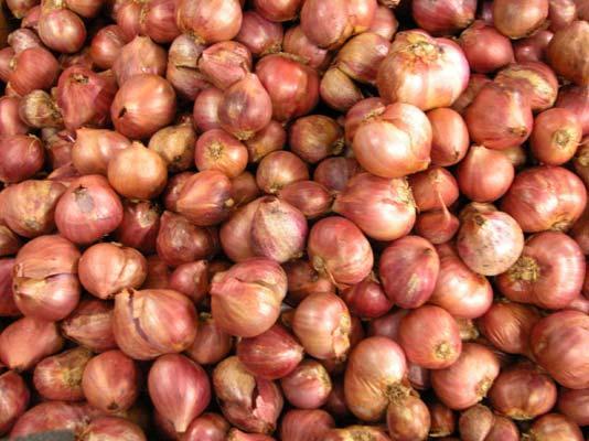 Как садить лук севок