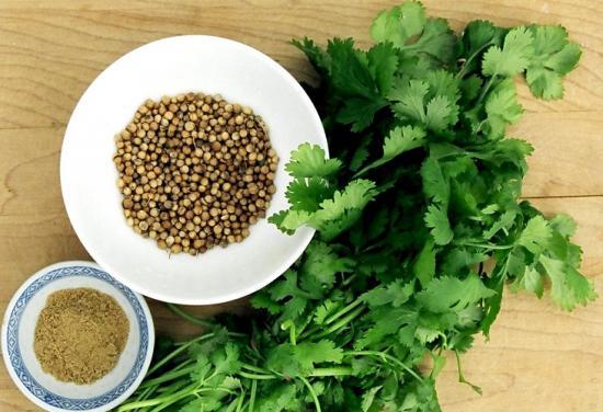 Семена кинзы и как их используют