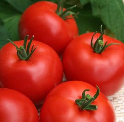 Выращивание и формирование куста томата