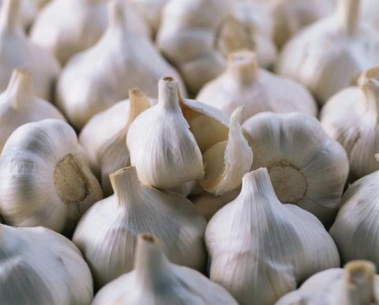Сажалка для чеснока и его выращивание