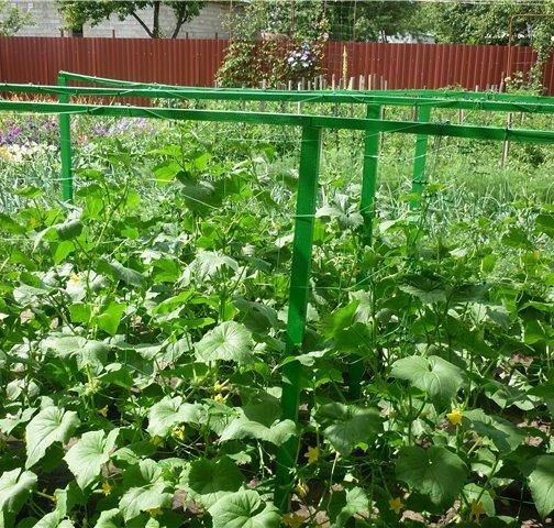 Шпалерная сетка для огурцов и ее преимущества