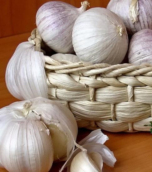 Разновидности чеснока и его выращивание