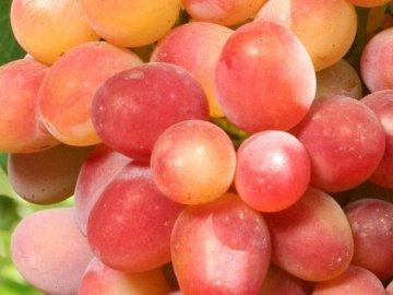 Морозостойкий виноград