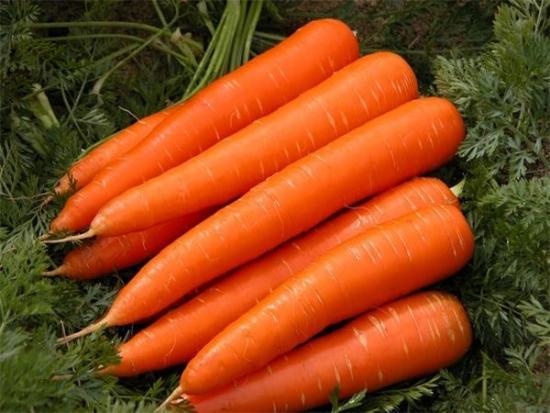 Морковь зрелая