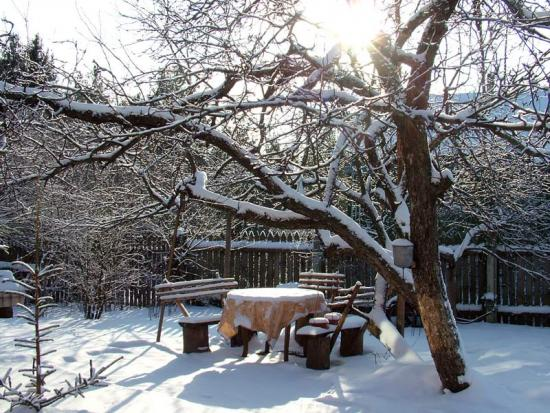 Сад зимой