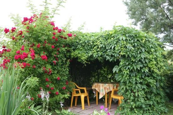 Беседка из лиан в саду