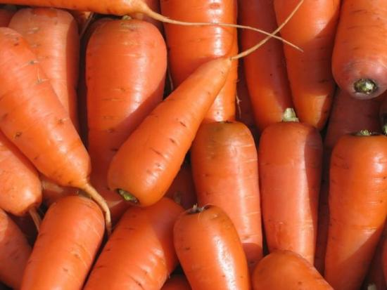 Морковь для хранения