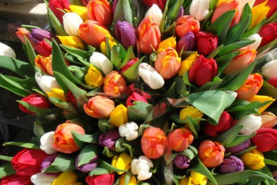 Тюльпаны из луковиц