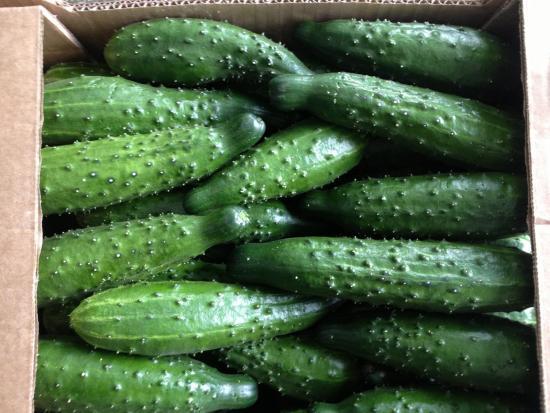 Плоды огурцов