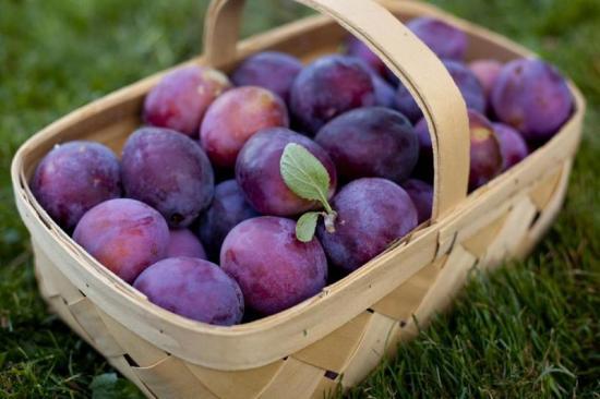 Слива, плоды