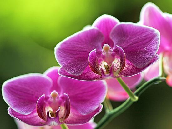 Орхидеи в саду