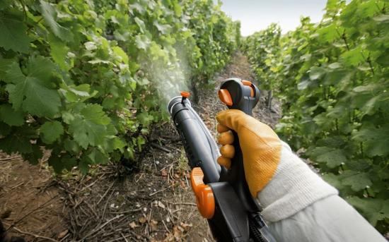 Виноград, опрыскивание