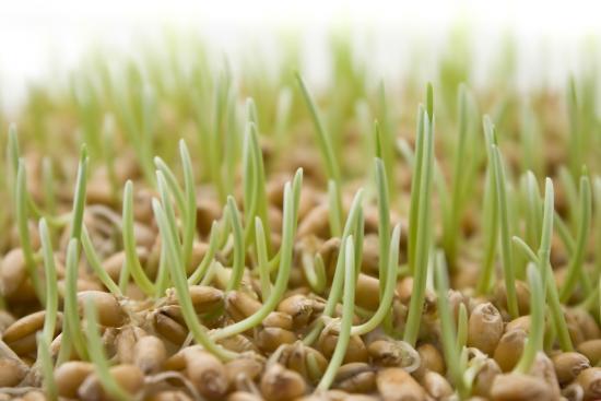 Ростки из плазменных семян