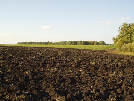 Почва, в которой находятся полезные бактерии