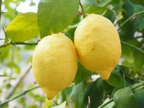 Здоровый лимон