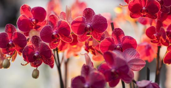 Орхидея цветок