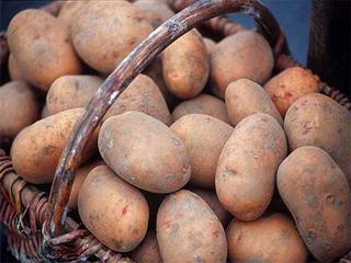 Самые популярные сорта картофеля для Черноземья