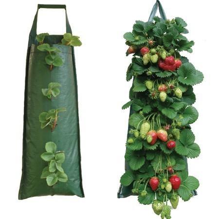 Выращивание клубники в мешках – выгодный бизнес