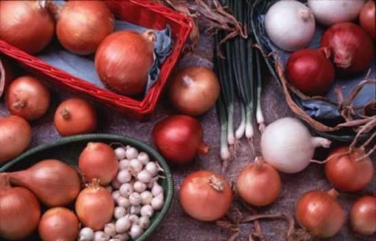 Как вырастить хороший лук на приусадебном участке