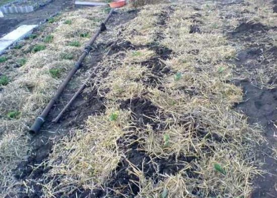 мульчирование травой