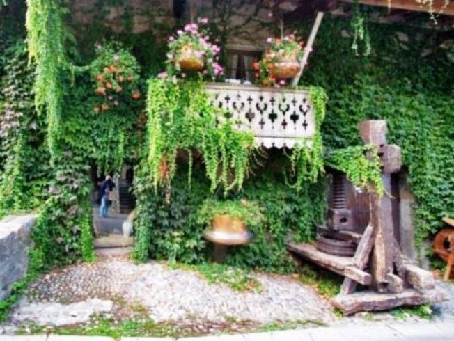 Вьющиеся растения, особенности ухода