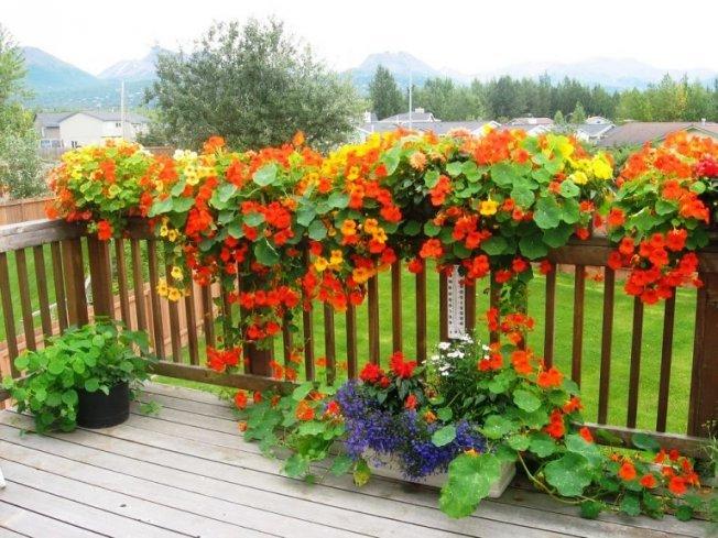 Ампельные растения в саду