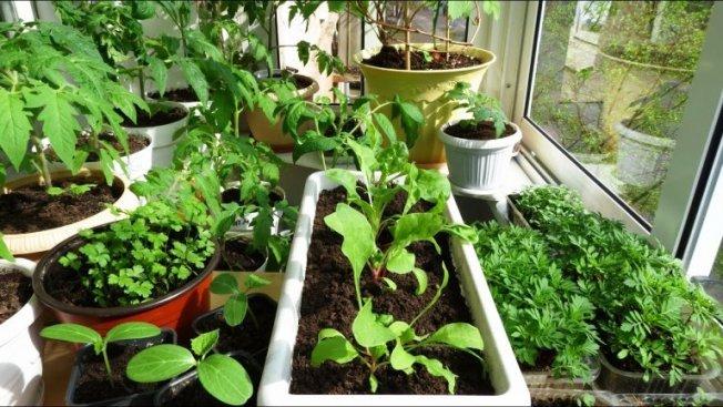 Как спланировать огород на балконе