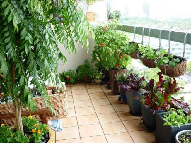 Какие культуры можно выращивать на балконе