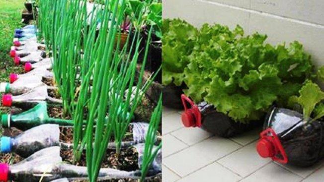 Выращивание овощей в пластиковых бутылках