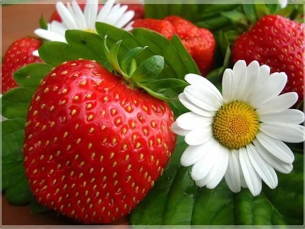 Чтобы ягоды клубники были здоровыми