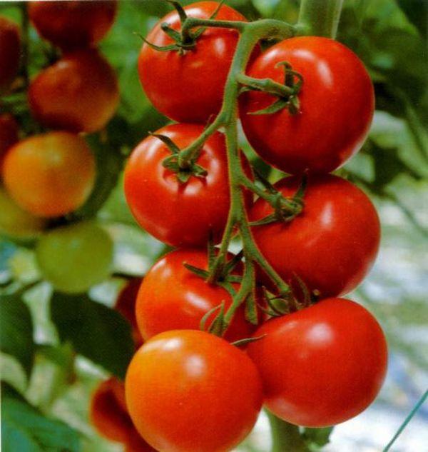 скачать бесплатно игру помидоры - фото 11